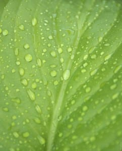 water drops on fern leaf
