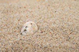 Amongst the Sand