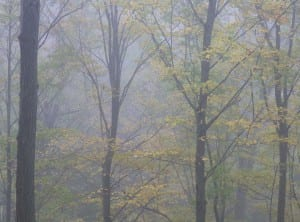 Foggy Afternoon in Spencer Gorge