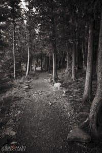 Cyprus Walk