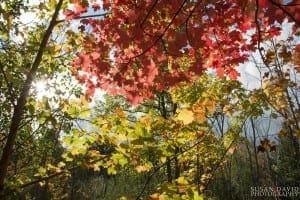 Through the Autumn Colours