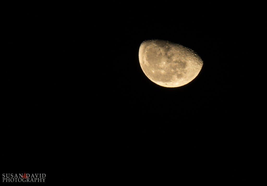 Waning Wolf Moon