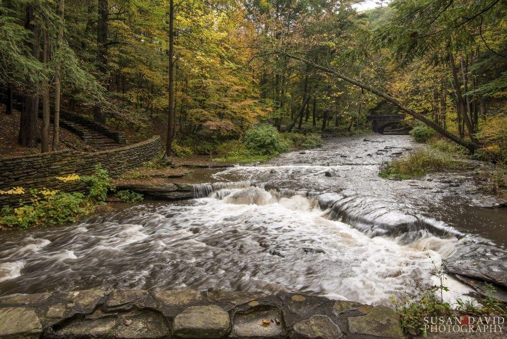 Wolf's Creek