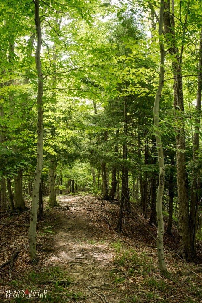 Kimberley Trail