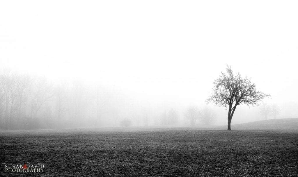 Tree and the Fog