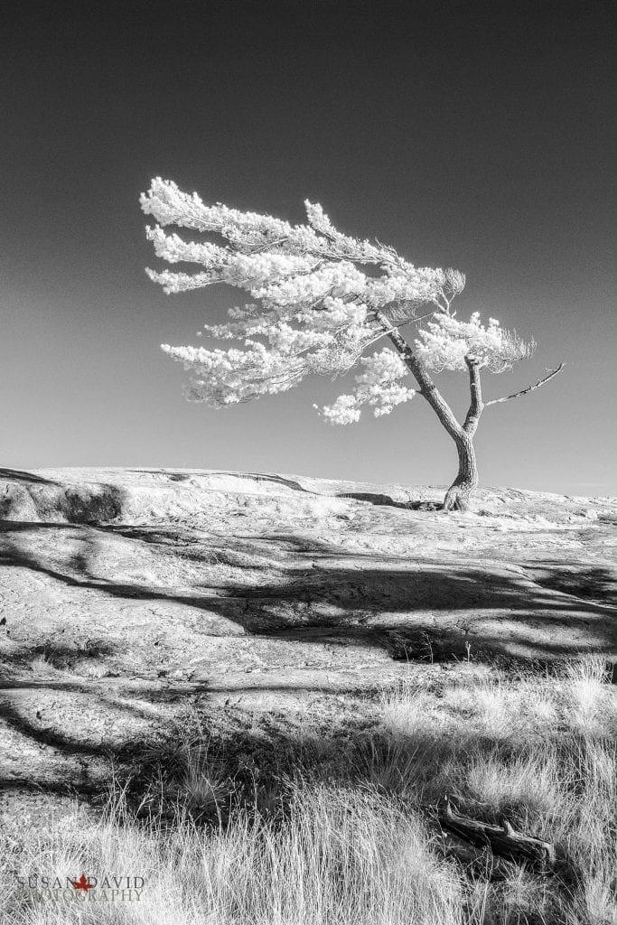 Lone Pine Killbear PP