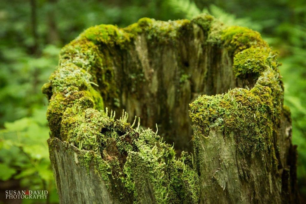 Shroomy Stump