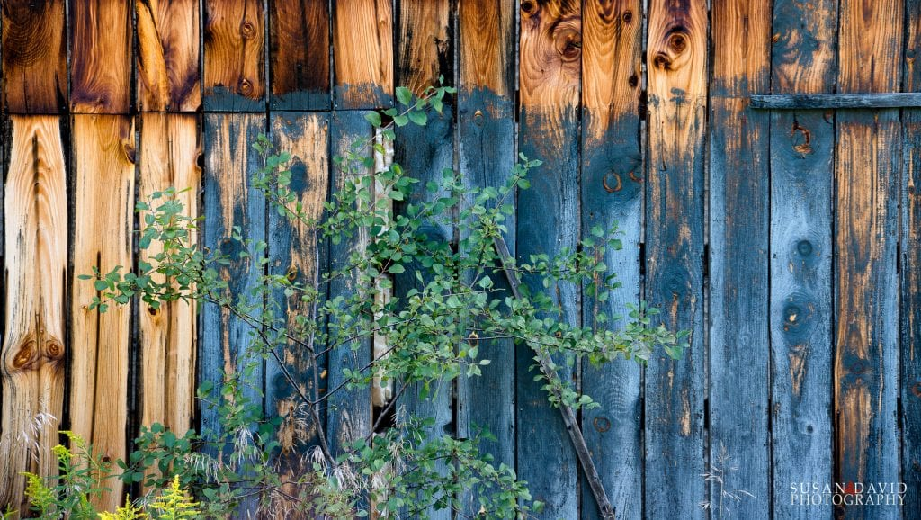 Old Shed Wall