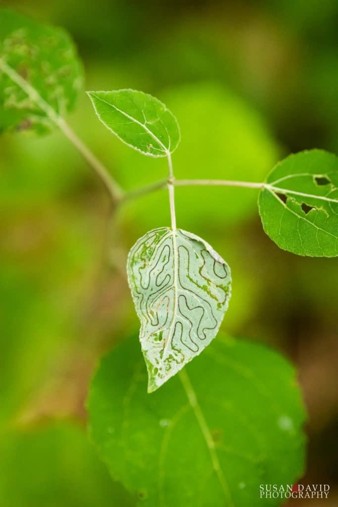 Leaf Maze Pattern