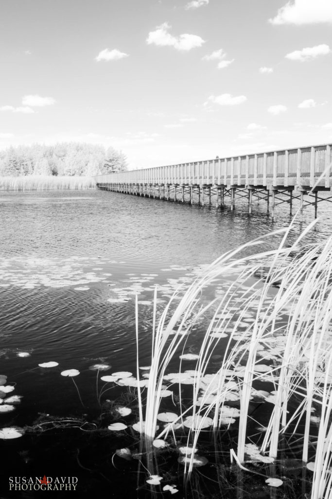 Island Lake Bridge in InfraRed