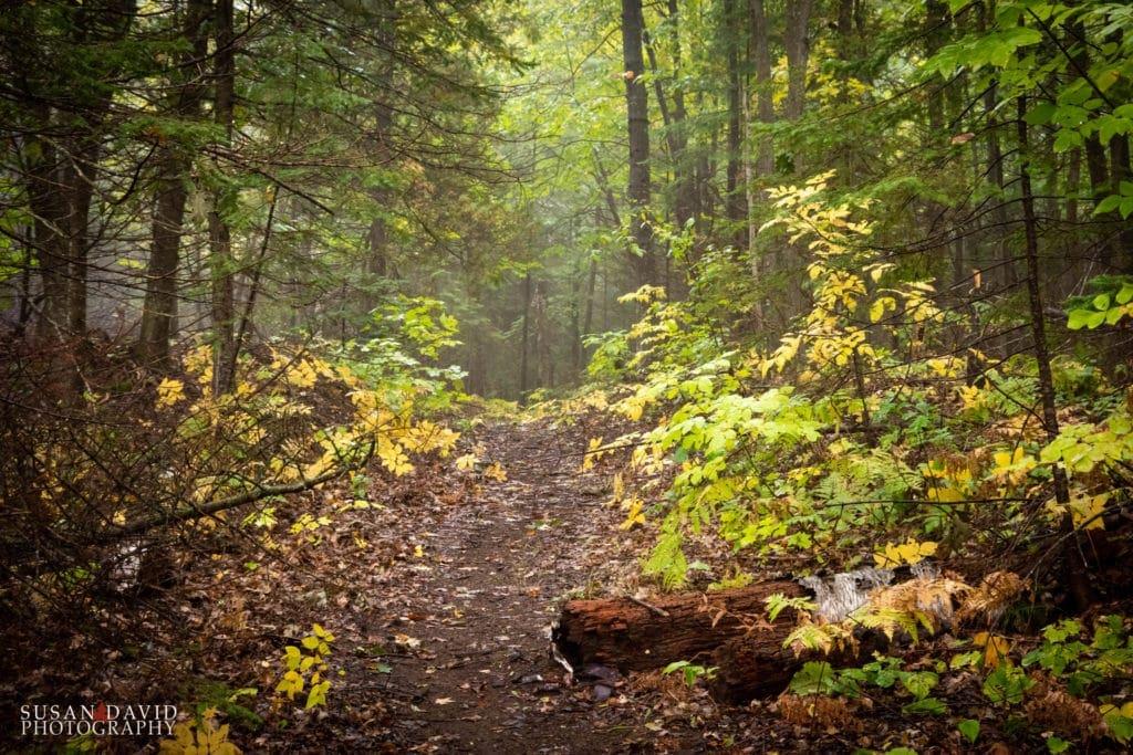 Misty Autumn Trail