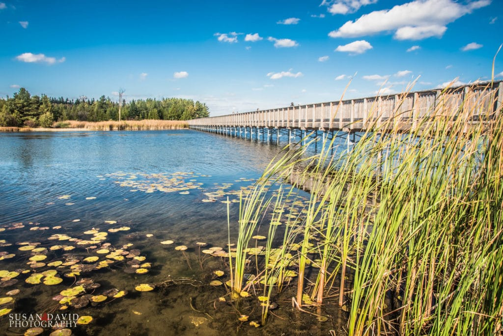 Island Lake Bridge in Colour