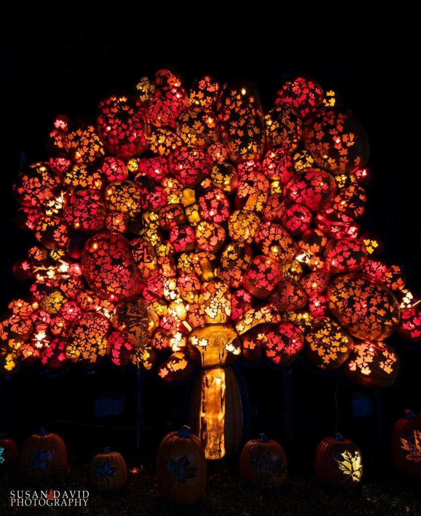 Pumpkin Maple Tree
