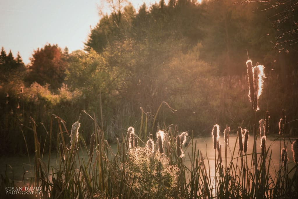 Light on the Reeds