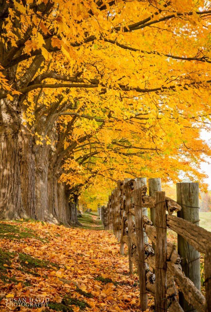 Absolute Autumn