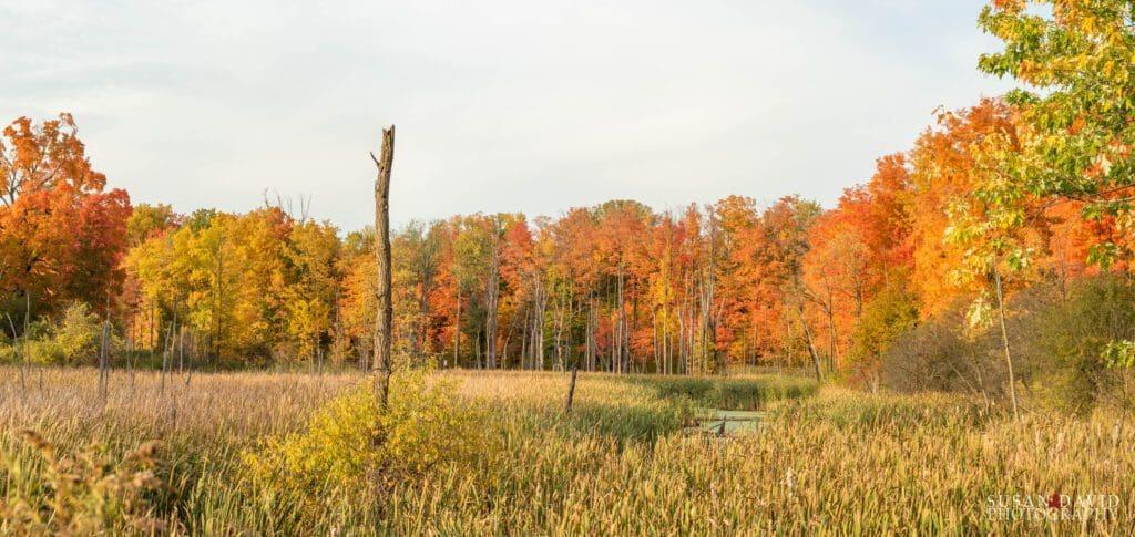 Claireville Autumn Colours
