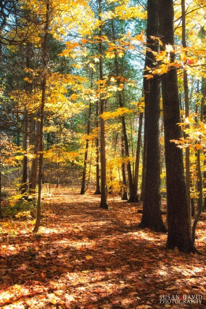 Elora Trail