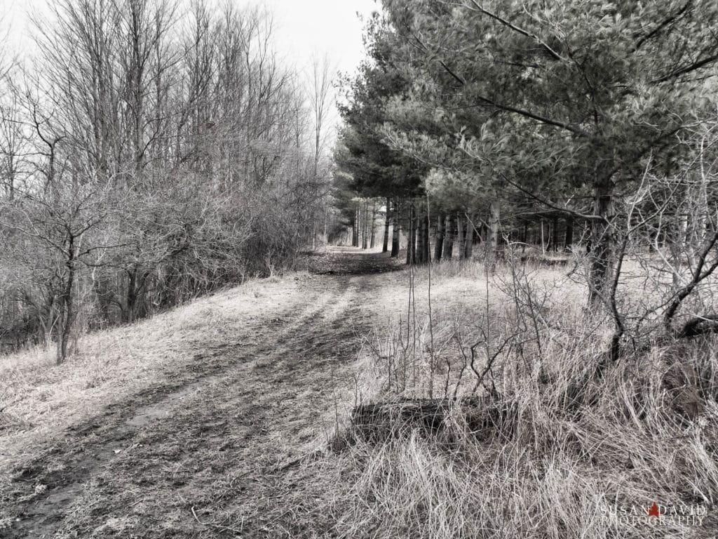 Dreary Trail Hike