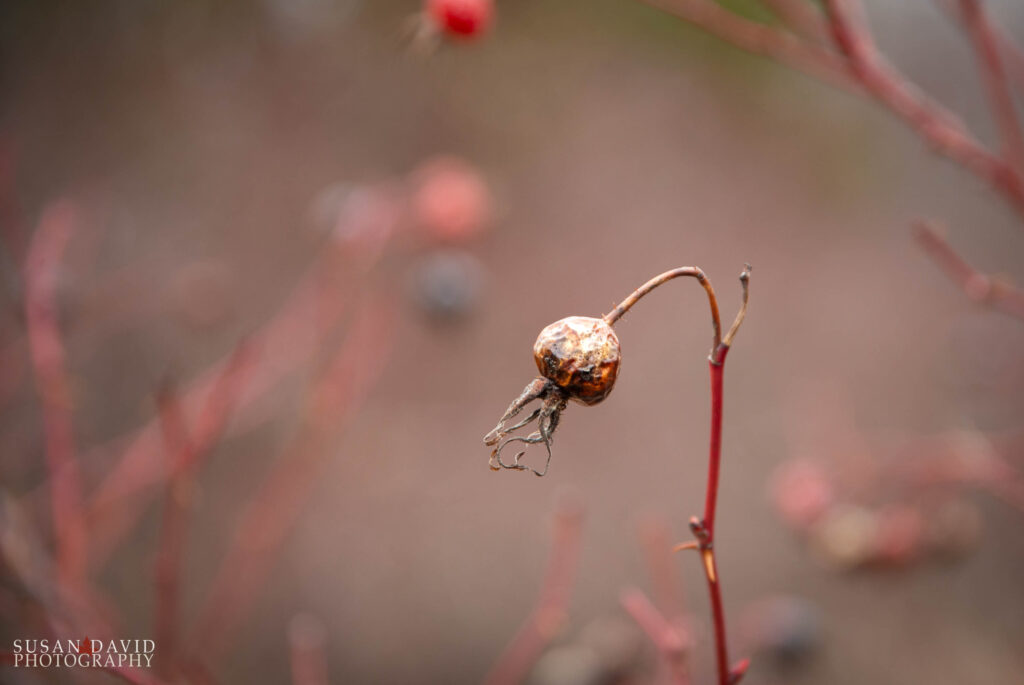 Shriveled Berry
