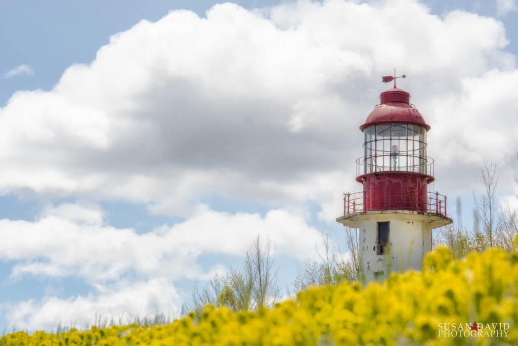 Cabot Head Lighthouse with Wolf's Milk flowers
