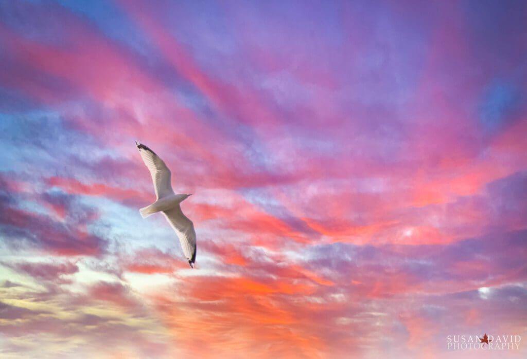 Seagull Comp