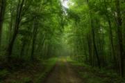 Beaver_Meadow_Trail