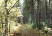 Walk_Through_the_Woods
