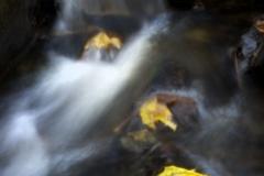 Leaves_of_Three