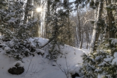 Winter_Forest_Path