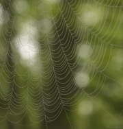 Spiders_Web