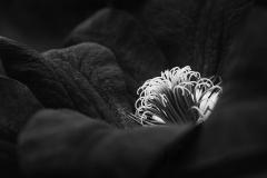 Jewel_in_the_Garden