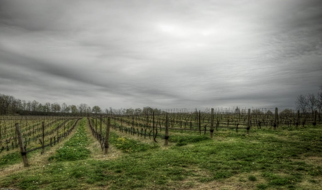 vineland-estates-winery.jpg