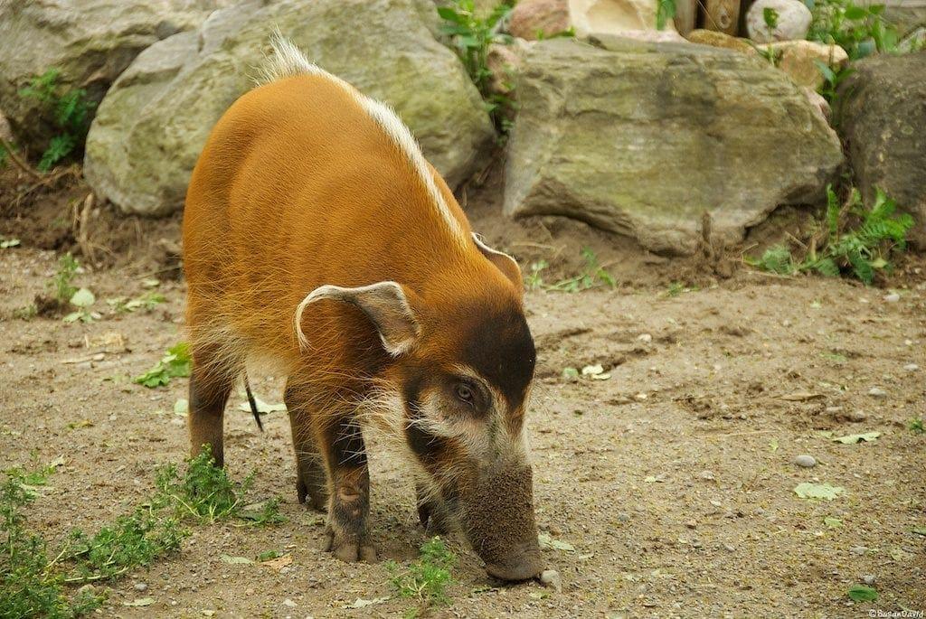 tapir-1-1024x685.jpg