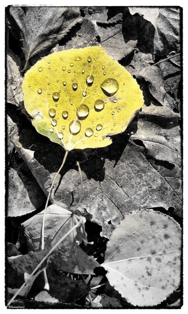 Droplets-613x1024.jpg