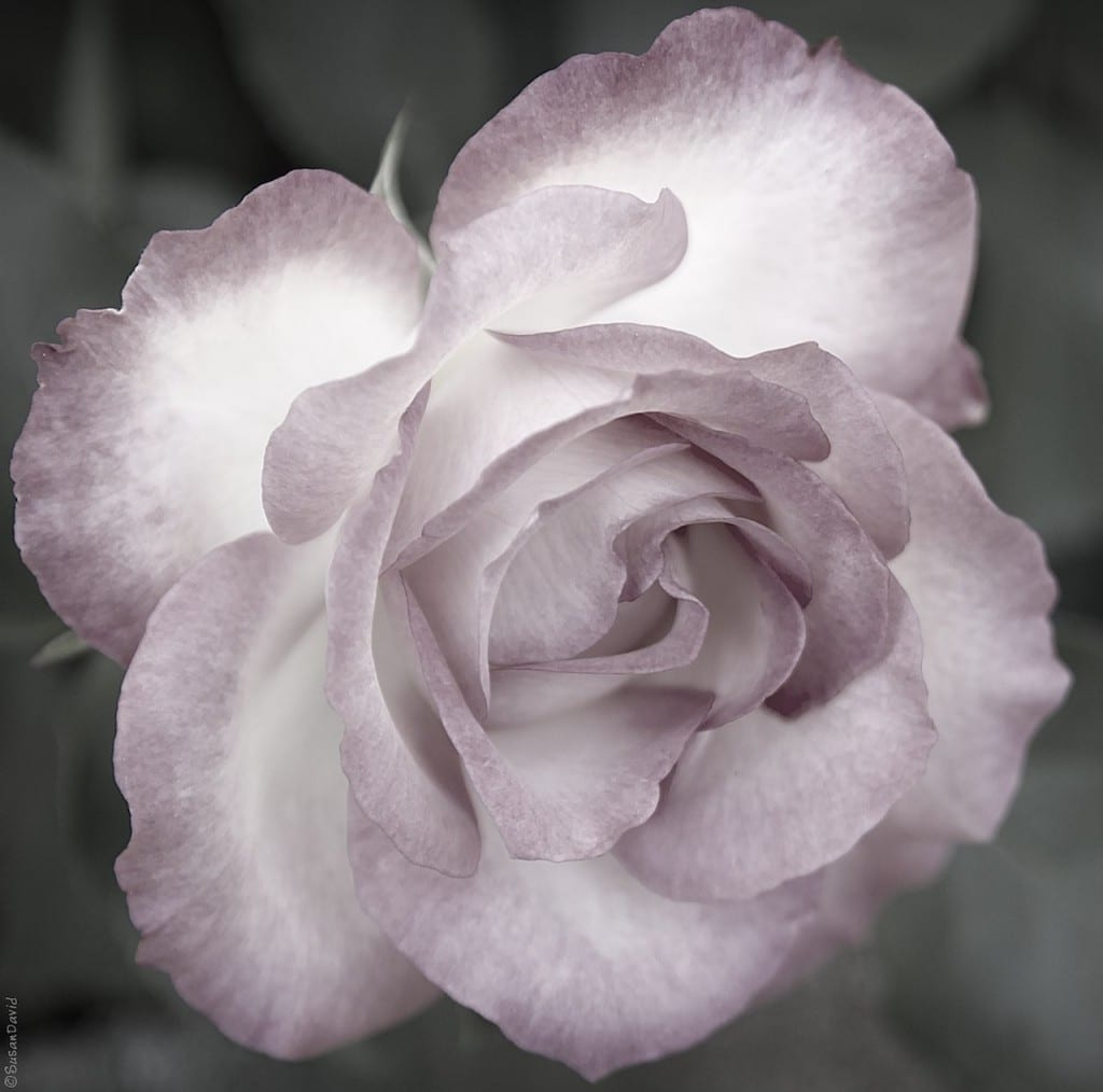 Pretty-in-Pink-1024x1014.jpg