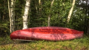 Red canoe leaning against birch trees