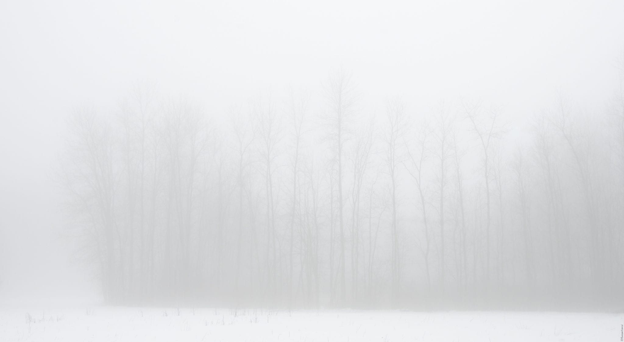 The-Ghostly-Forest.jpg