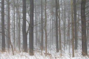Winter's Fog