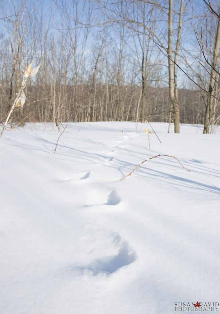 Footsteps-in-the-Snow-717x1024.jpg