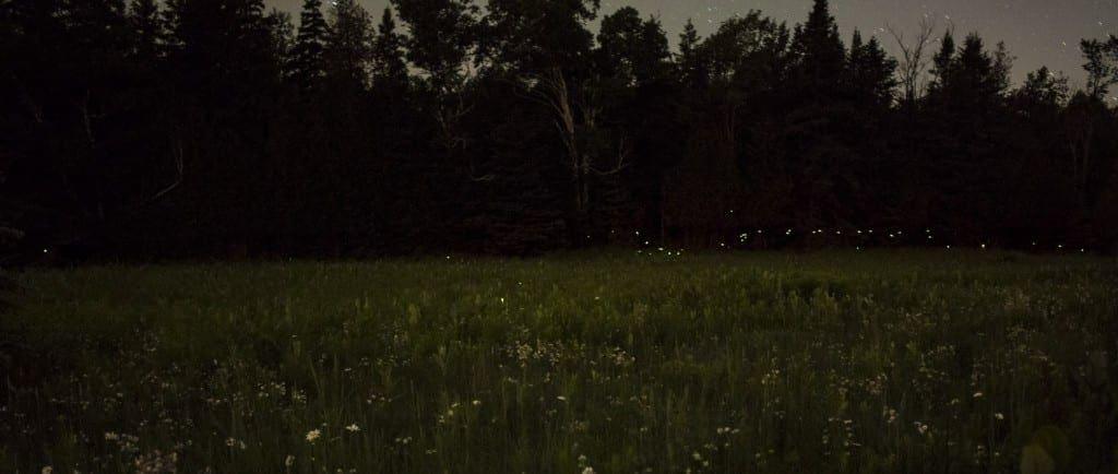 Fireflies-1024x434.jpg