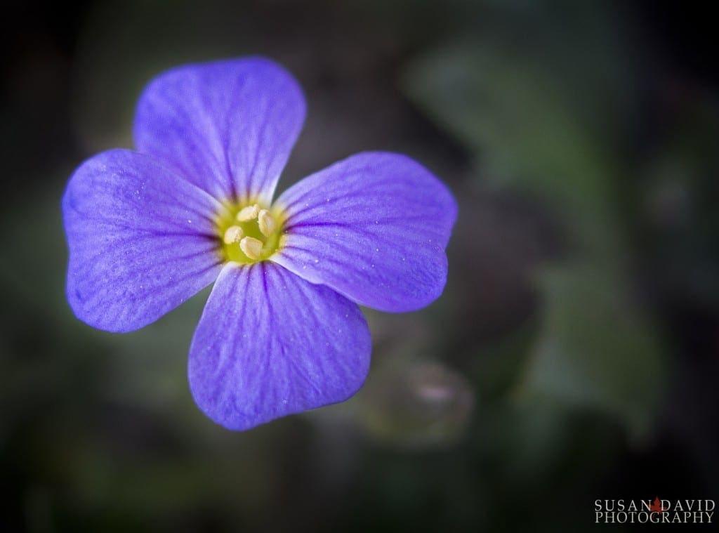Lonely-Flower-1024x759.jpg