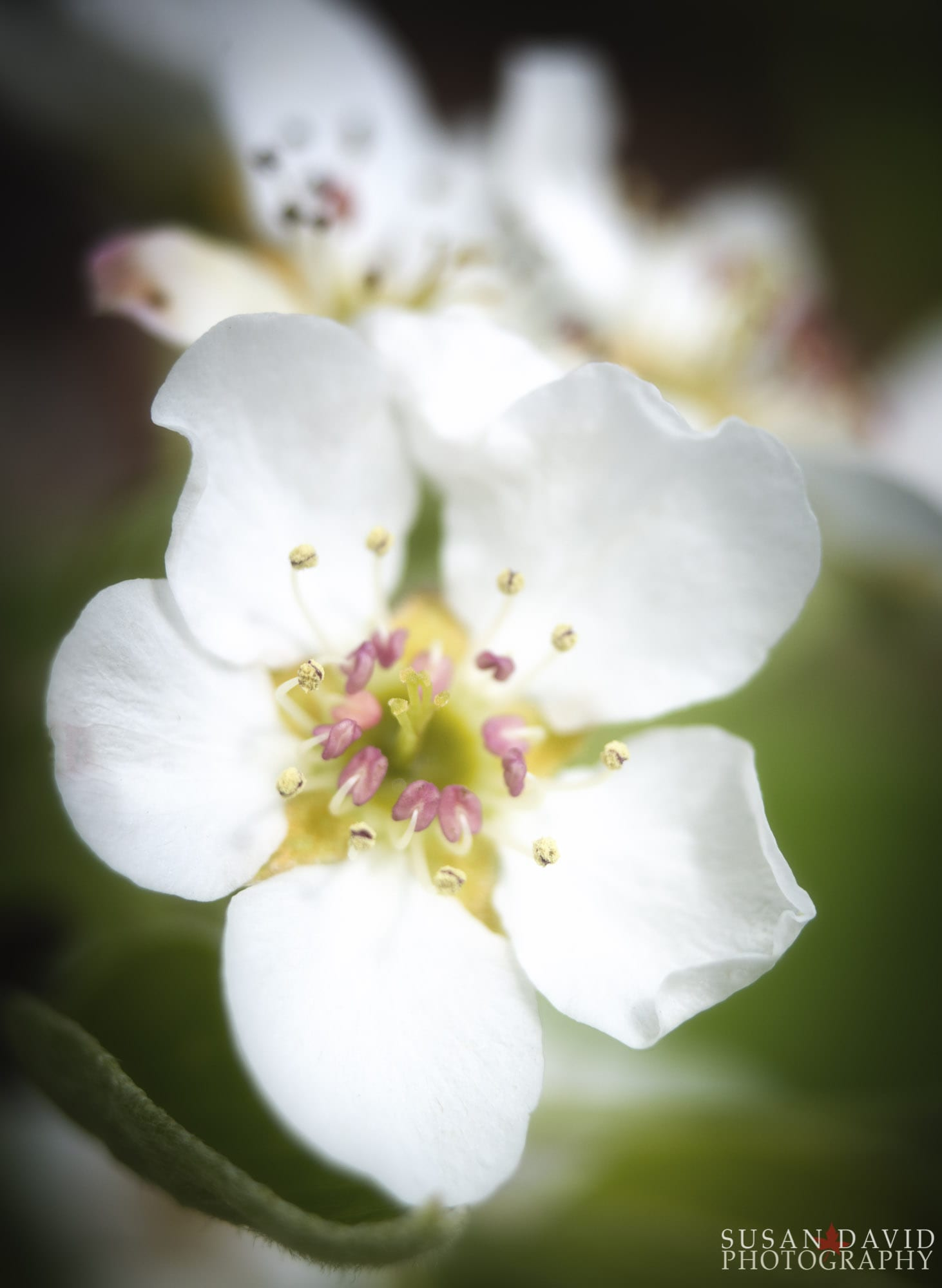 Pretty Little Flowers Susan David Photography