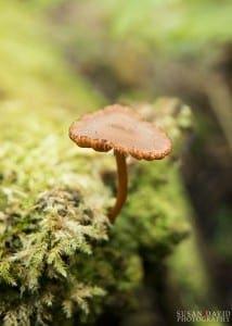 Mushroom-in-Moss-214x300-1.jpg