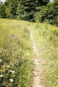 Follow the Dirt Path