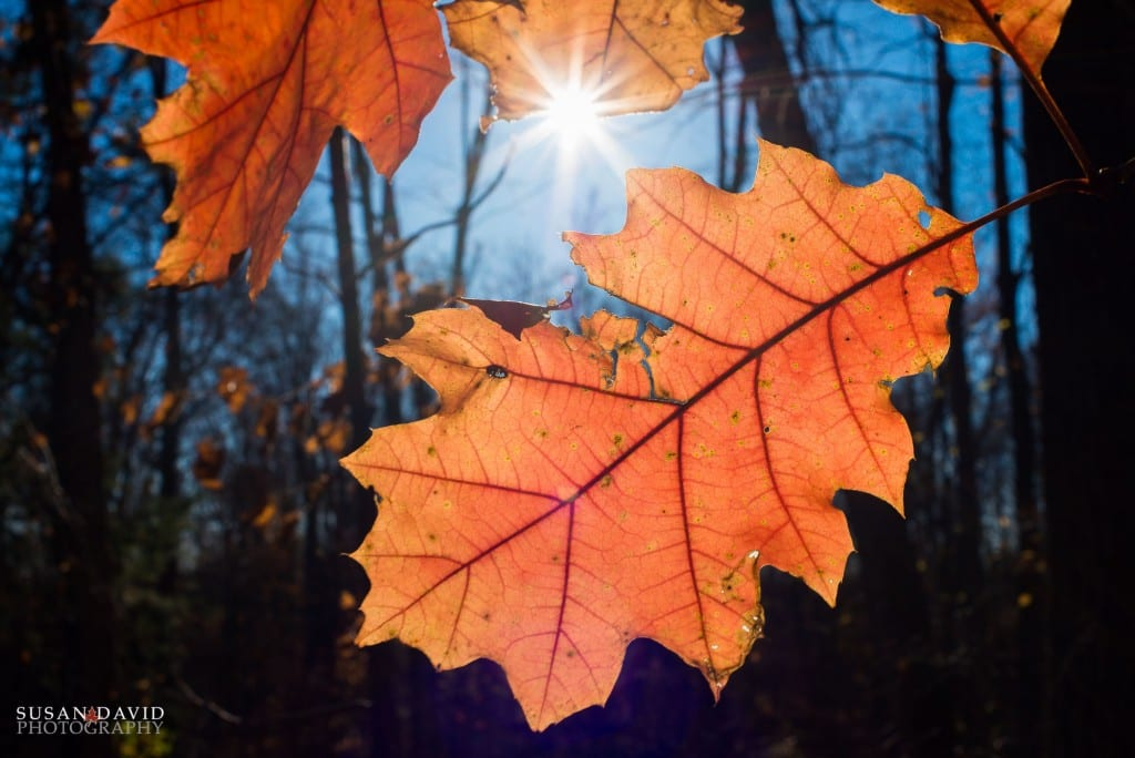 Leaves-of-Red-1024x684.jpg