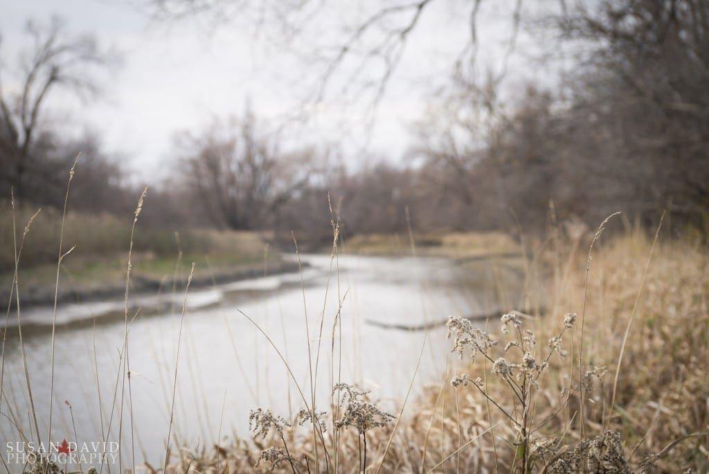 Reeds-1024x684.jpg