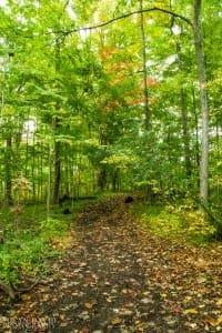 As Autumn Enters