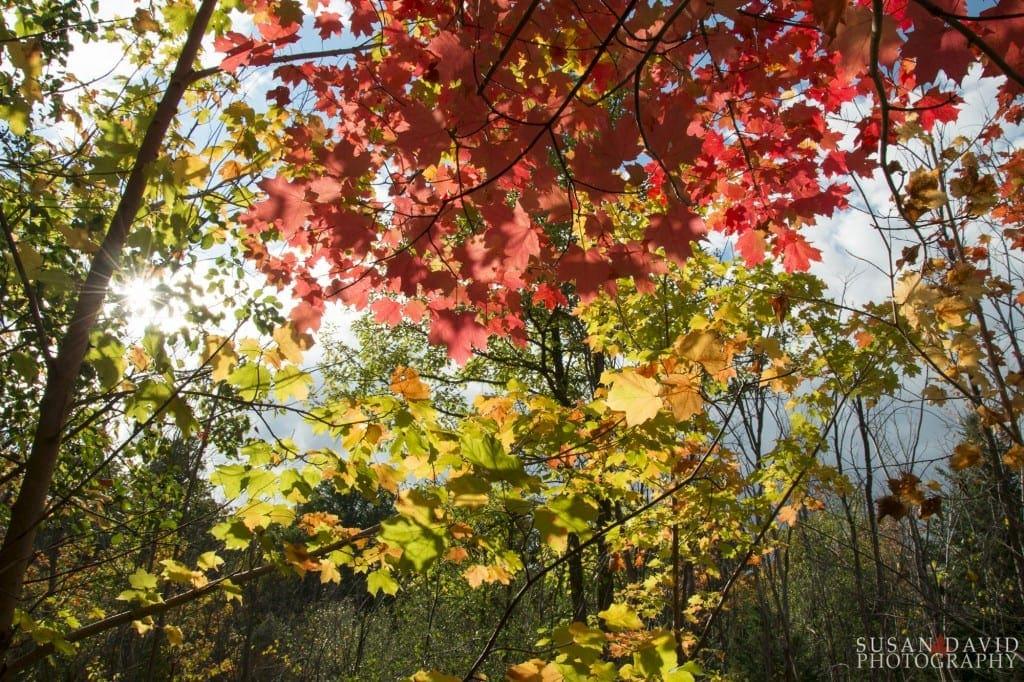 Through-the-Autumn-Colours-1024x682.jpg
