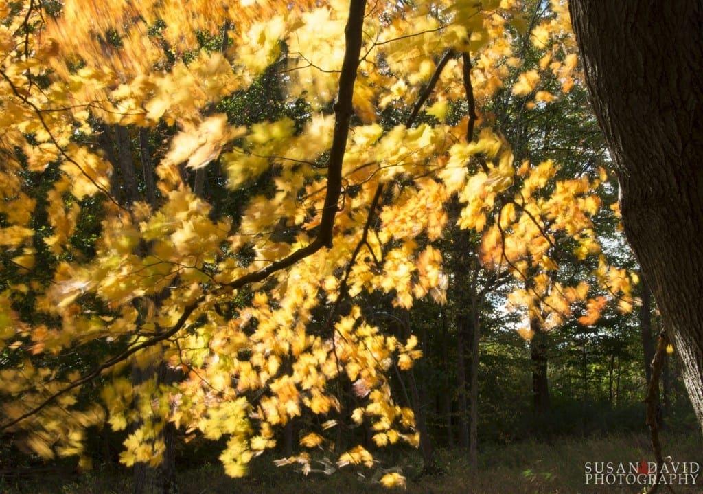Yellow-Wind-1024x719.jpg