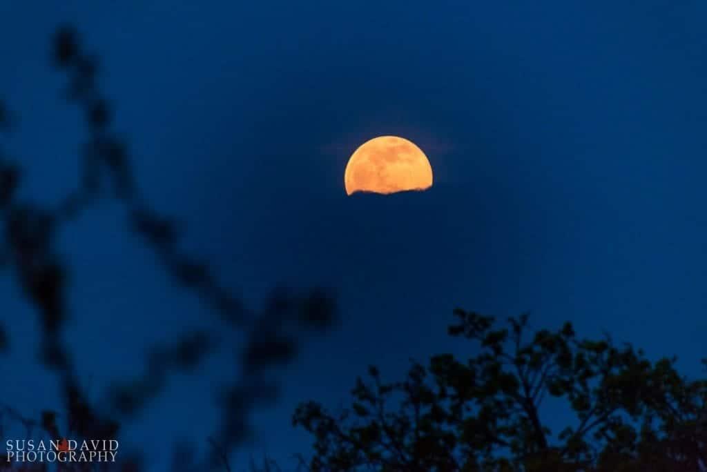 May-Moon-1024x684-1024x684.jpg